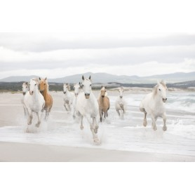 PHOTOMURAL 368*254 WHITE HORSES